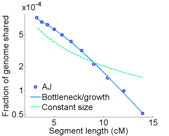 The pattern of lengths of shared segments in Ashkenazi Jews (AJ) cannot be explained by a constant population size, but is very well fitted into a population undergoing a severe bottleneck (decrease in the population size) followed by rapid expansion. From Carmi et al., Nat. Commun., 2014.